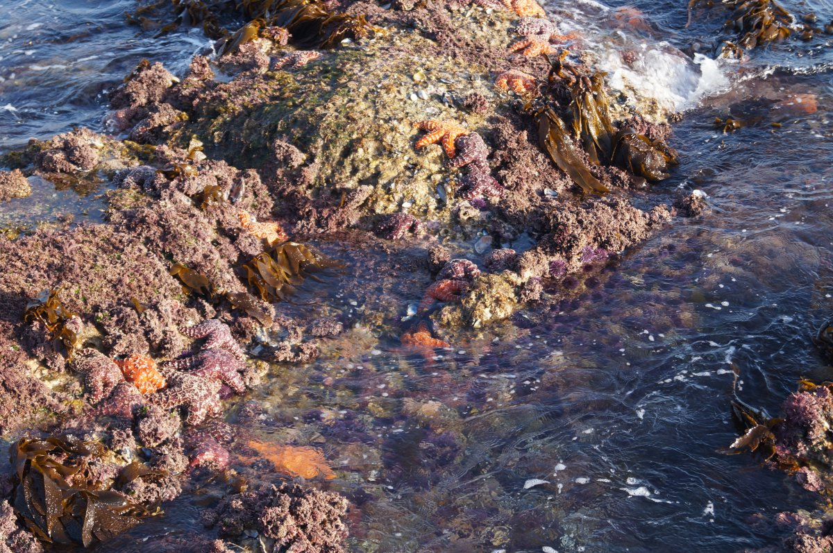 Aliso Beach Treasure Island Tide Pools California