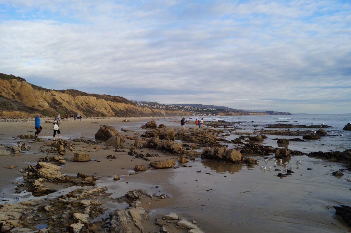 Crystal cove state park pelican point tide pools california tide attached upper tidal area nvjuhfo Image collections