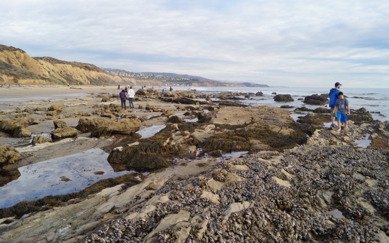 Mussels are common on the exposed rocks