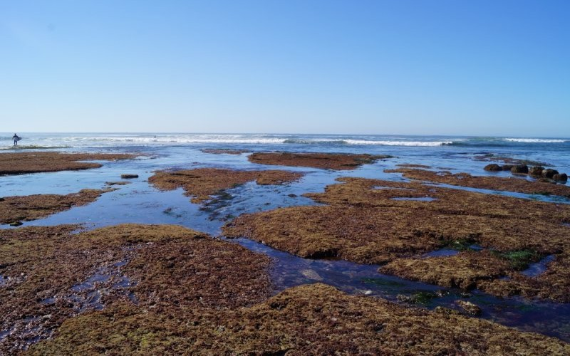 sunset cliffs - Flat algae covered tidepool area