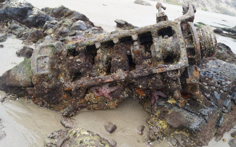 An old engine is home for a variety of marine life