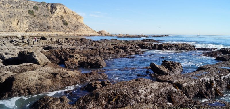 Many channels intersect the rocky area creating good tidepool habitat