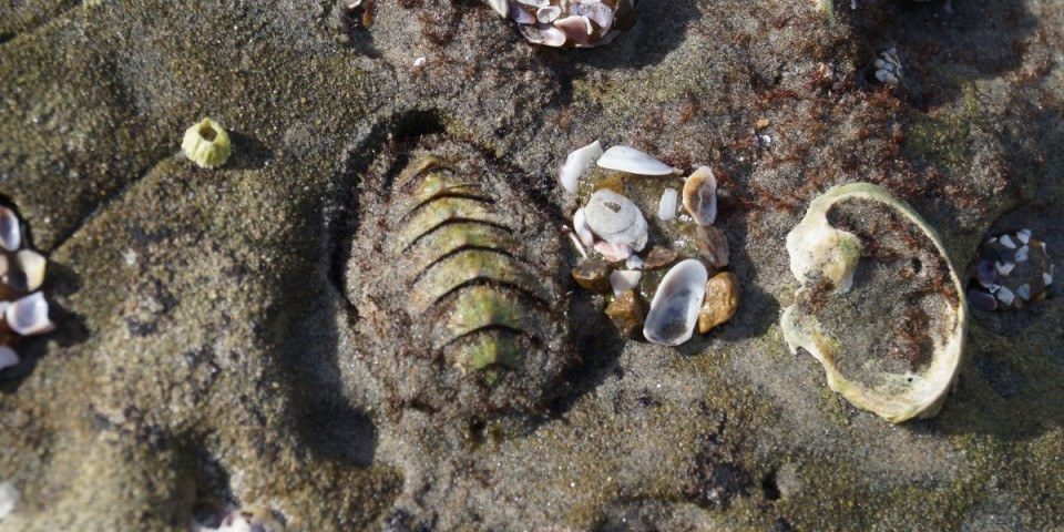 how to make a chiton