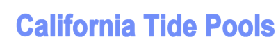 California Tide Pools Logo