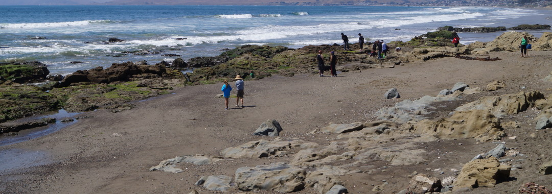 The Morro Bay tide pools receive lots of visitors